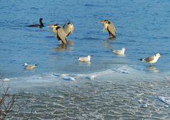 Gemischte Vögel