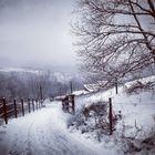 Gemünd 2013 - Schlittenspuren im Schnee