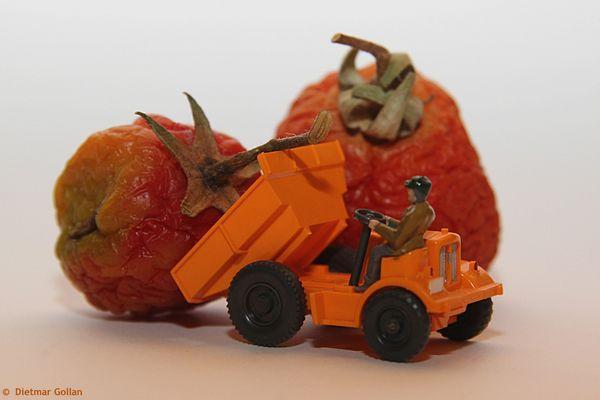 Gemüsetransport durch Fachpersonal