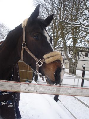 genießer im schnee