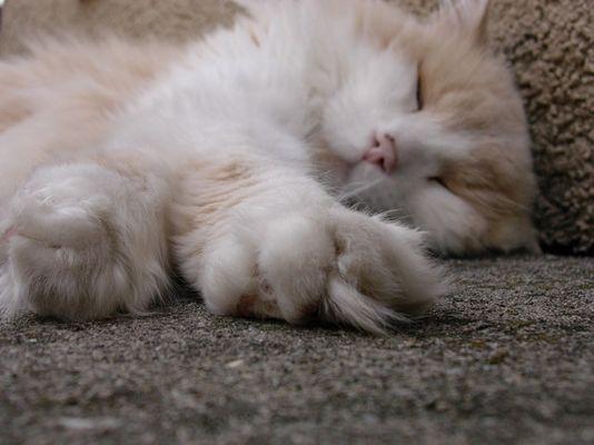 Geniesser Katze