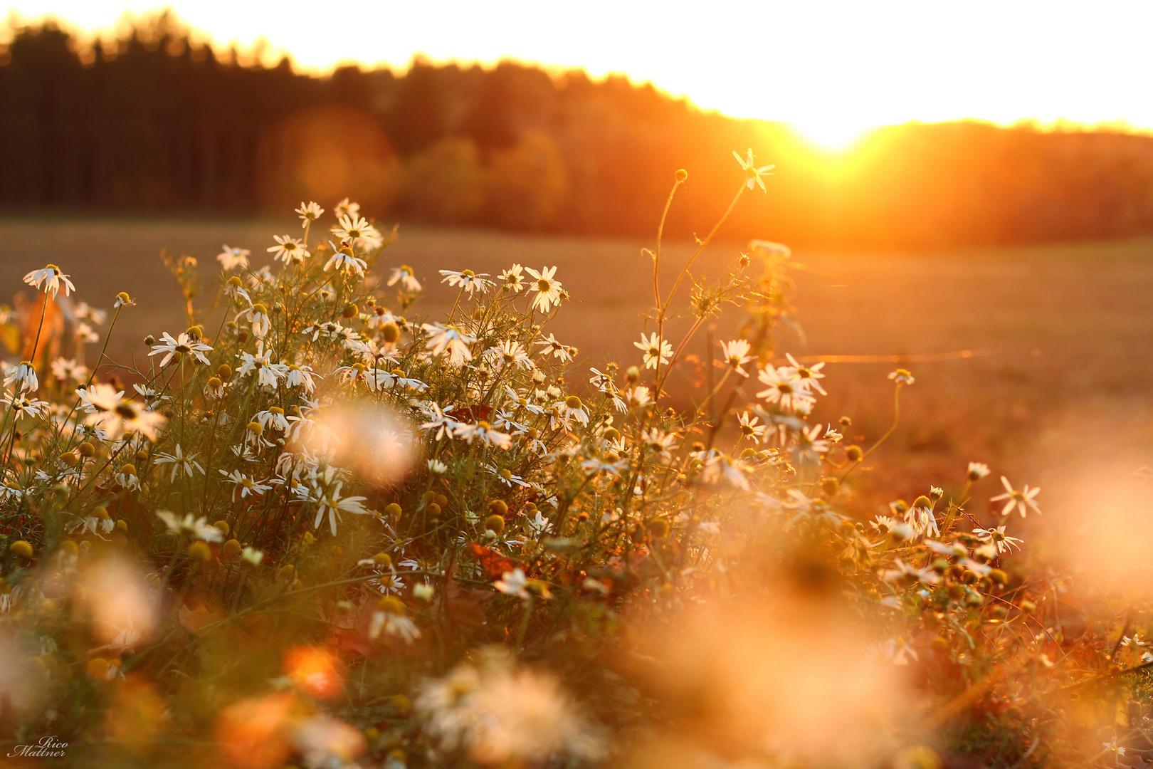 Genießt die letzten Sonnenstrahlen!