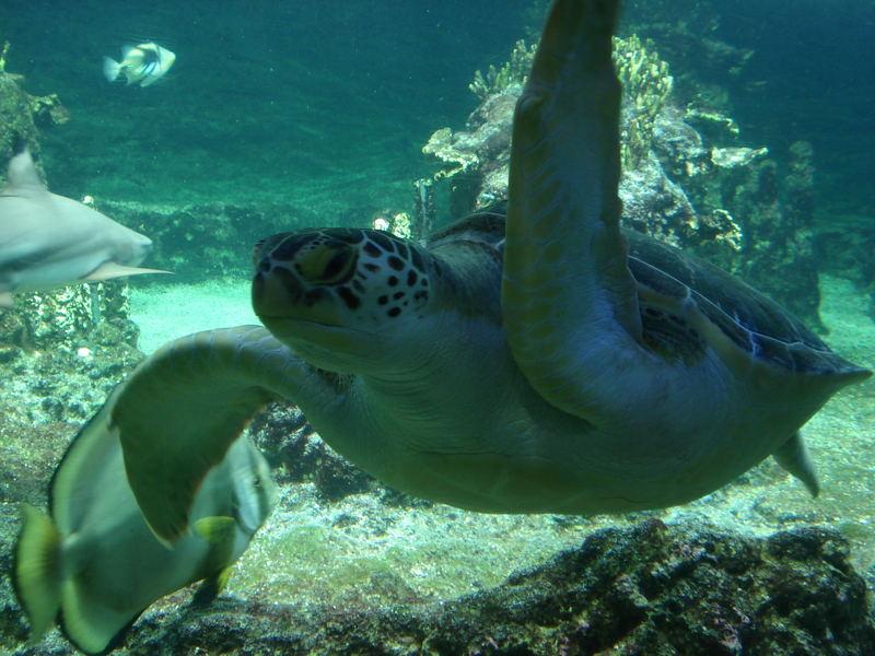 Genua Aquarium Schildkröte