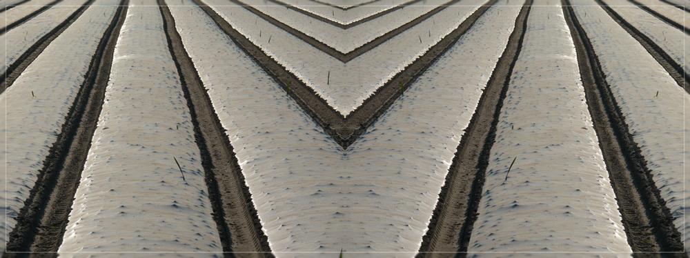 Geometricfields