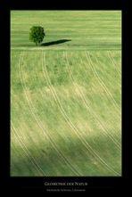 Geometrie der Natur I