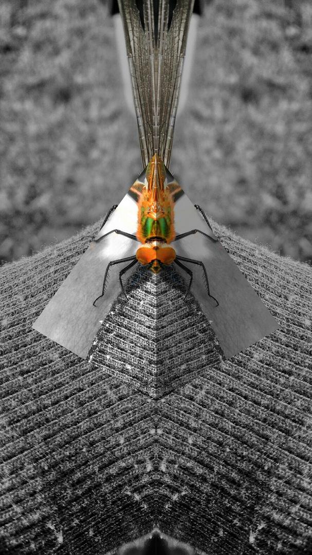 Geometrisches Insekt...