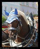 Georgiritt Tittmoning 27.4.2008 - Nr. 15