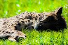 Gepard 2.0