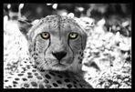 Gepard 3S54226r
