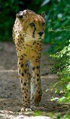 """Gepard """"Reload"""""""