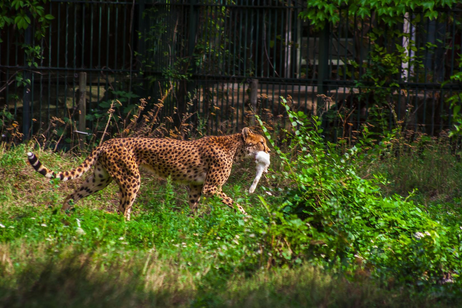 Gepard2