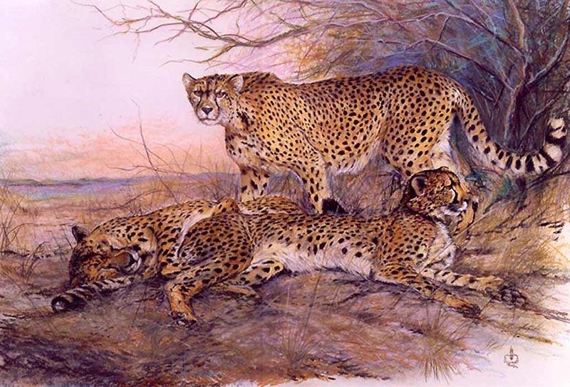 Geparden in Kenia ( Kreide)