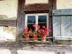 geranienfenster