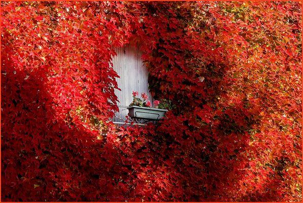 Géranium en automne