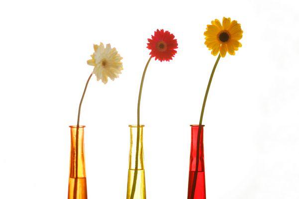 Gerbera in Vasen