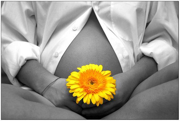 Gerbera vor Babybauch