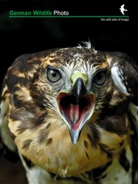 German Wildlife Photo