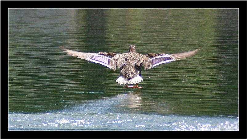 German Wings flight is landing ...