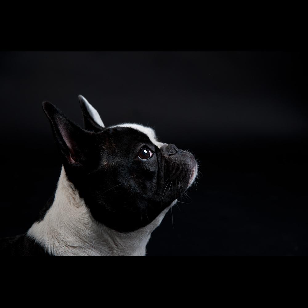 Germany's next dog model