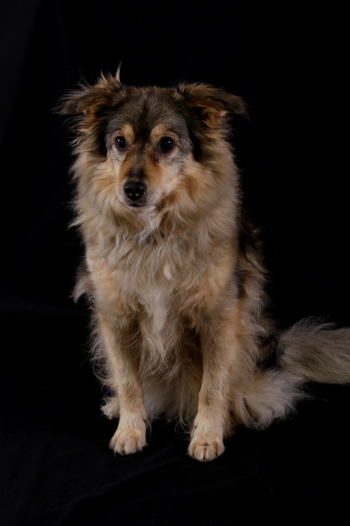 germanys next dogmodel