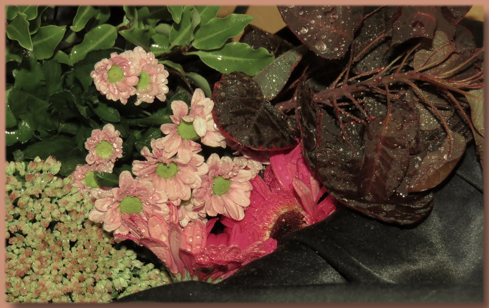 Germini  (im Blumenstrauß von Lidl),