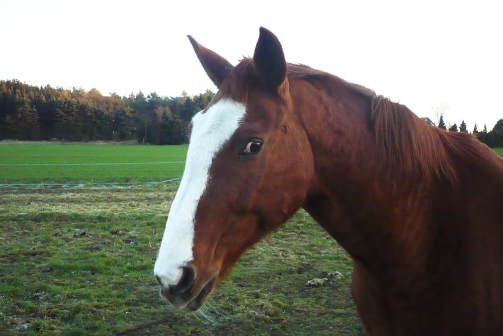 gerry das klügste pferd der welt und ein schelm dazu....