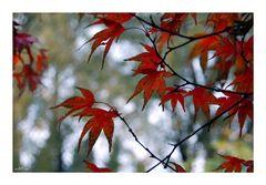 Gescheckter Herbst......