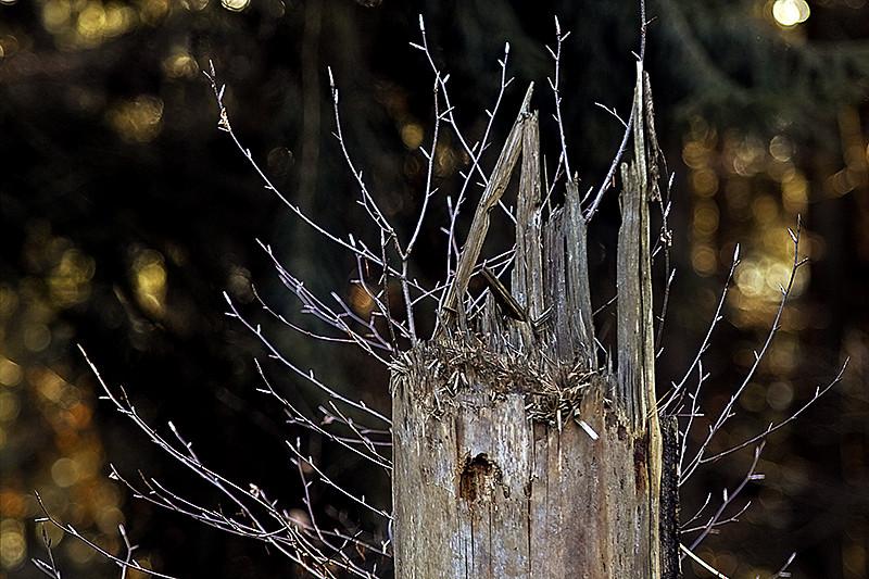 Geschichten aus dem Wald XV (neue Frisur)