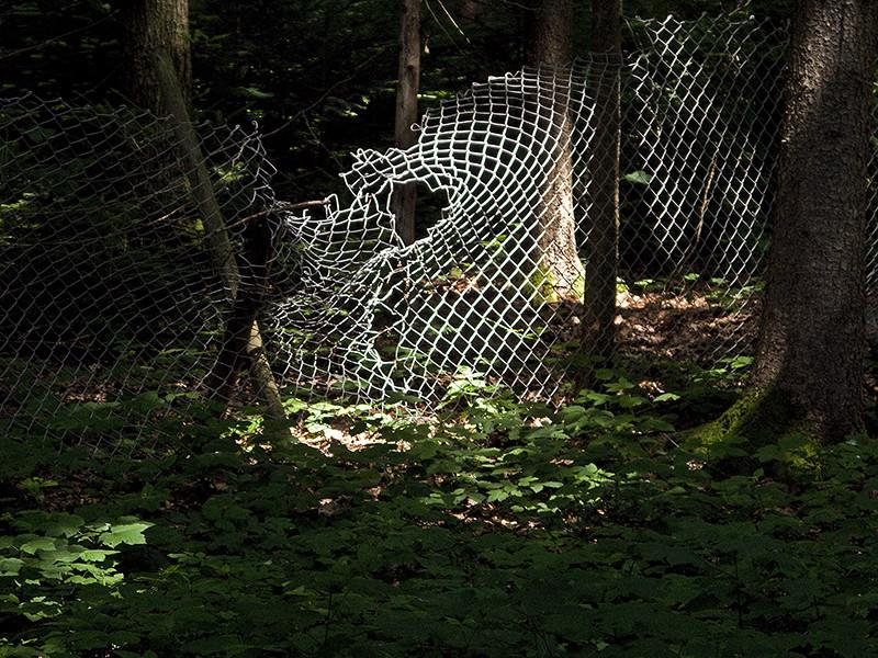 Geschichten aus dem Wald XXII