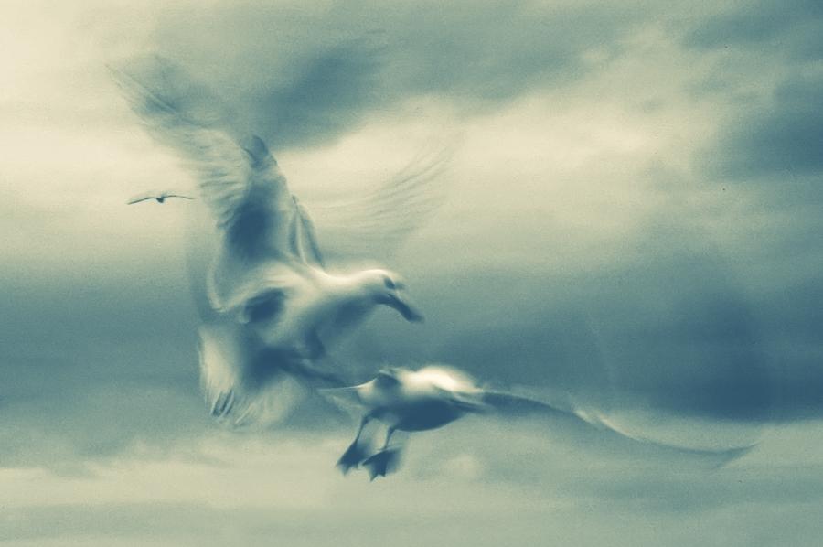 Geschichten Vögel