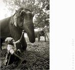 Geschichten von Hathi und Hatschi #2