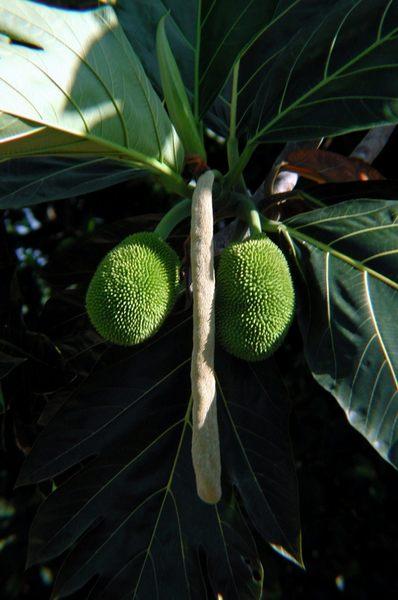 Geschickte Anordnung von Pflanzenteilen zu einer eindeutigen Gesamtkomposition