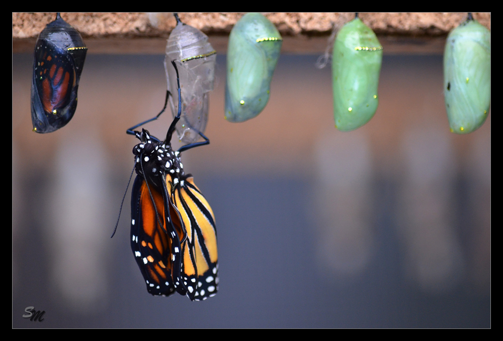 ~Geschlüpfter Schmetterling~