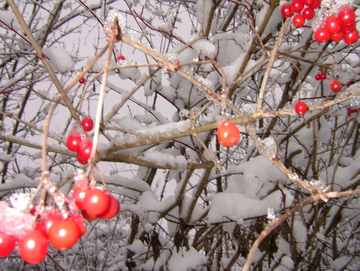 Geschmückter Natur-Weihnachtsbaum