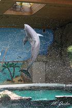 Geschraubter Delphin