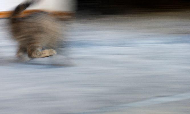 Geschwindigkeit...oder , wo ist die halbe Katze?