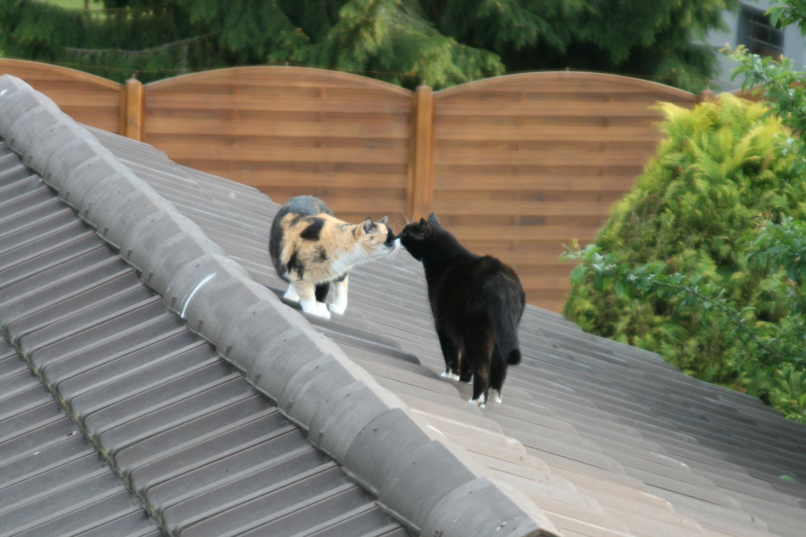 Geschwister treffen sich auf dem Dach