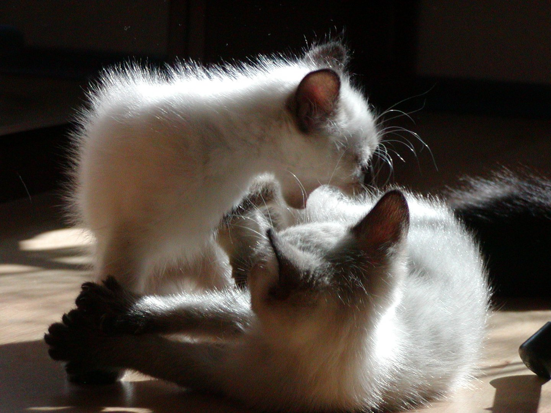 Geschwisterkampf