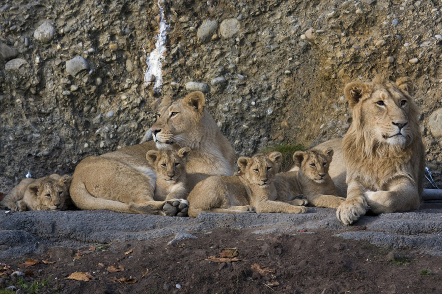 Geschwisternliebe im Zoo Zürich