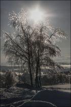 Gesegnetes Neues Jahr und weiterhin einen schönen Winter