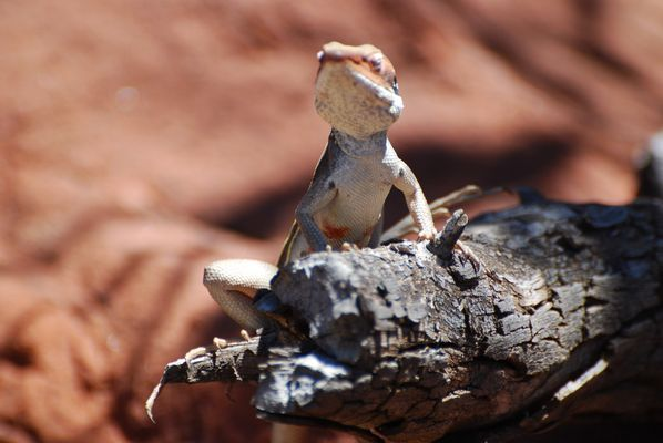 Gesehen in Australien im Palm Valley