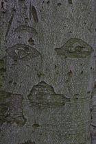 Gesicht in Baumrinde