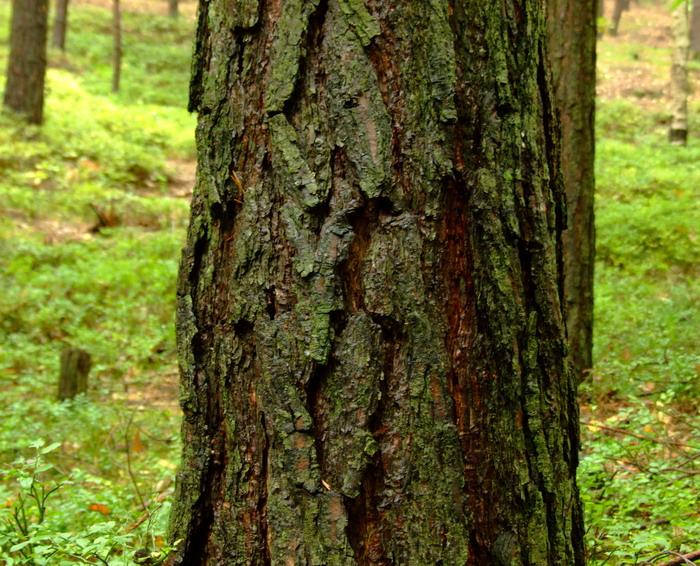 Gesichter des Waldes 11.