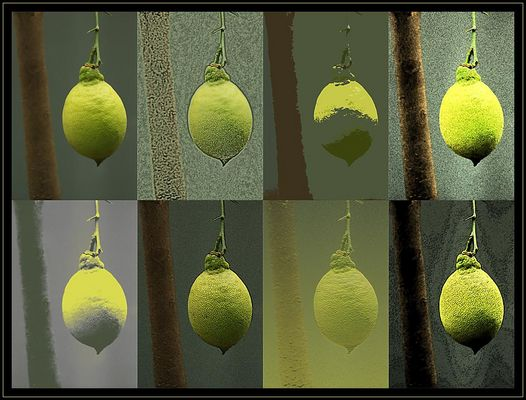 Gesichter einer Zitrone