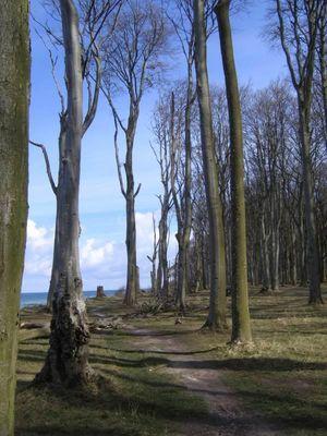 Gespensterwald ohne Gespenster