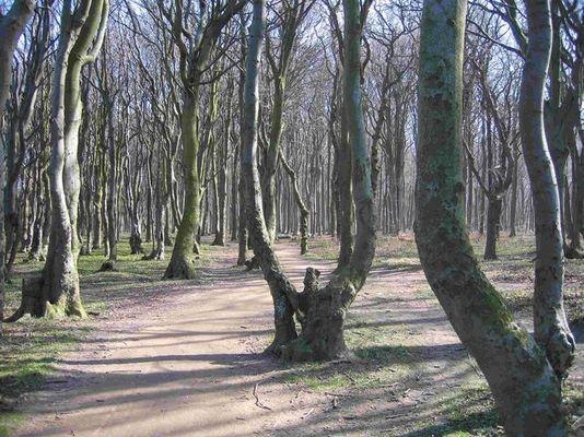 Gespenstige Bäume