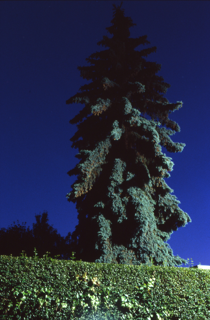 Gespenstischer Baum