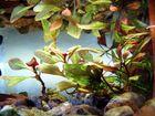 Gespiegelt an der Wasseroberfläche des Aquariums