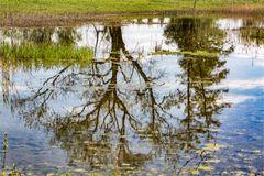 Gespiegelt in einem Teich ...