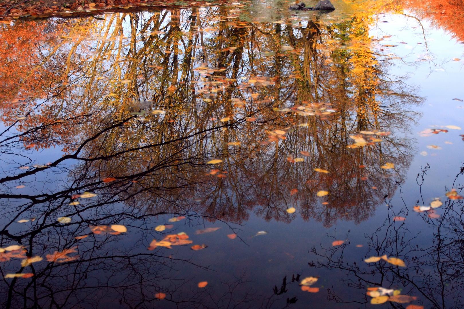Gespiegelte Herbststimmung